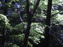 Tapeta Lesy nad Kunčinou 14