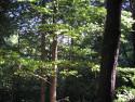 Tapeta Lesy nad Kunčinou 15