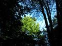 Tapeta Lesy nad Kunčinou 16