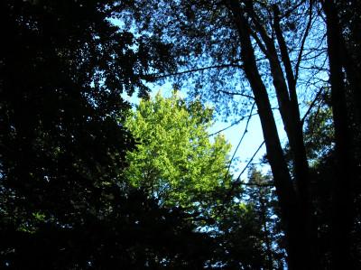 Tapeta: Lesy nad Kunčinou 16