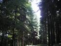 Tapeta Lesy nad Kunčinou 17