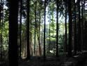 Tapeta Lesy nad Kunčinou 18