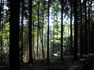 Tapeta: Lesy nad Kunčinou 18