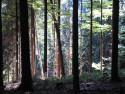 Tapeta Lesy nad Kunčinou 19