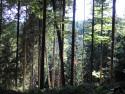 Tapeta Lesy nad Kunčinou 20