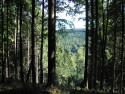 Tapeta Lesy nad Kunčinou 21