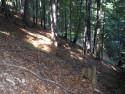 Tapeta Lesy nad Kunčinou 23