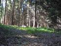 Tapeta Lesy nad Kunčinou 24