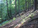 Tapeta Lesy nad Kunčinou 25