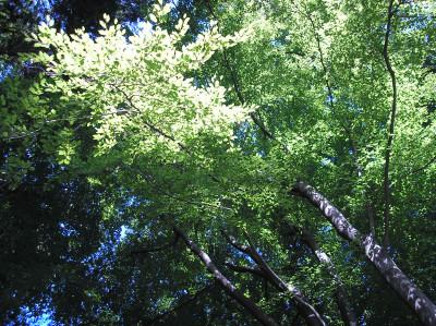Tapeta: Lesy nad Kunčinou 26