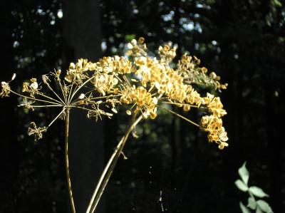Tapeta: Lesy nad Kunčinou 27