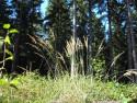 Tapeta Lesy nad Kunčinou 32