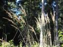Tapeta Lesy nad Kunčinou 33