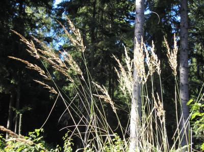 Tapeta: Lesy nad Kunčinou 33