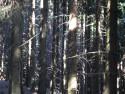 Tapeta Lesy nad Kunčinou 34