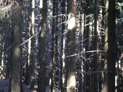 Tapeta: Lesy nad Kunčinou 34