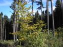 Tapeta Lesy nad Kunčinou 35