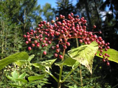 Tapeta: Lesy nad Kunčinou 38