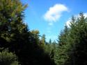 Tapeta Lesy nad Kunčinou 40