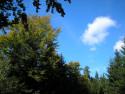 Tapeta Lesy nad Kunčinou 41