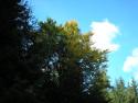 Tapeta Lesy nad Kunčinou 43
