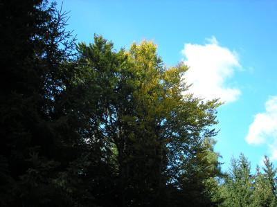 Tapeta: Lesy nad Kunčinou 43