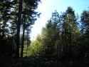 Tapeta Lesy nad Kunčinou 45
