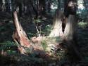 Tapeta Lesy nad Kunčinou 46