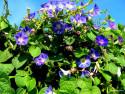 Tapeta letní krásky