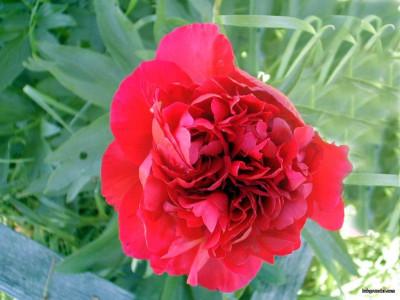 Tapeta: Letní kytičky 12
