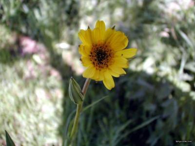 Tapeta: Letní kytičky 13
