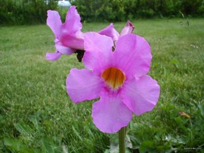 Tapeta: Letní kytičky 17