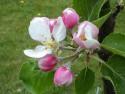 Tapeta Letní kytičky 9