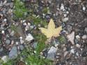 Tapeta List a kamení