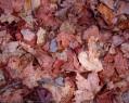 Tapeta Listoví