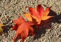 Tapeta Listy v písku
