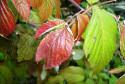 Tapeta Podzimní barvy