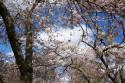 Tapeta jaro a stromy
