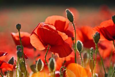 Tapeta: Luční květiny
