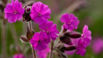Tapeta: Luční květiny 10