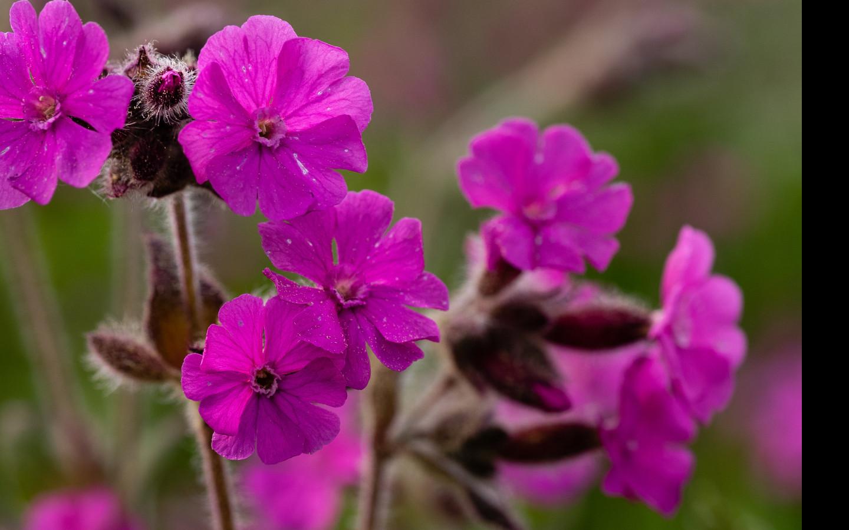 Tapeta lucni_kvetiny_10