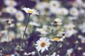 Tapeta Luční květiny 2