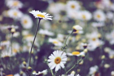 Tapeta: Luční květiny 2
