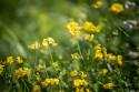 Tapeta Luční květiny 4