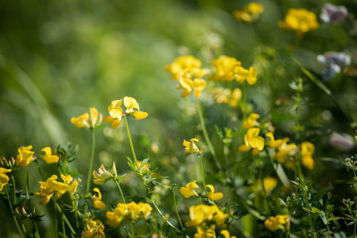 Tapeta: Luční květiny 4
