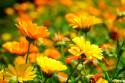Tapeta Luční květiny 5