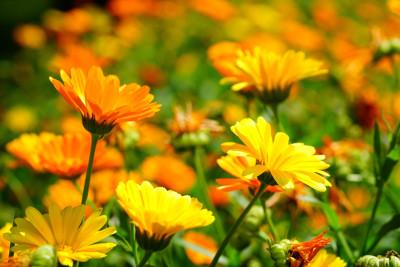 Tapeta: Luční květiny 5