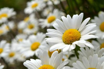 Tapeta: Luční květiny 6