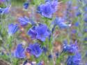 Tapeta Luční květiny 7