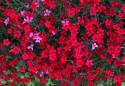 Tapeta Luční květiny 8